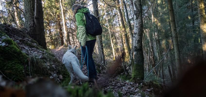 Auf vier Pfoten zur Mandolinenhütte (Rundwanderweg)