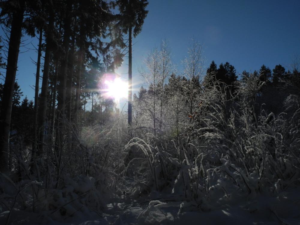 Vorbereitung Wandermarathon: Zwischen Kämpfergeist und Sofa-Monotonie
