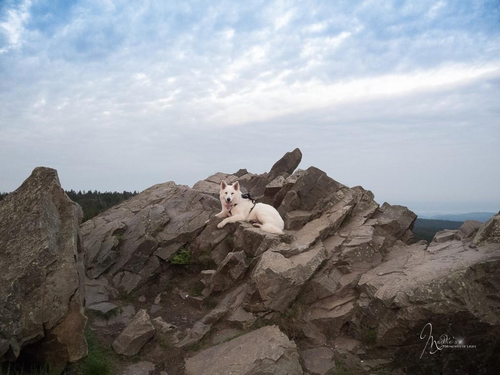 Wolfswarte-3