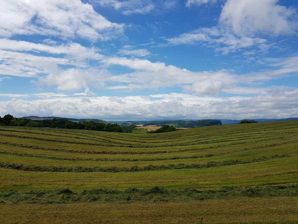Glücksgefühle und Südharzromantik – mein erster Wandermarathon