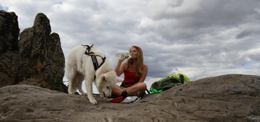 Hunde würden BAF to GO von Frostfutter Perleberg kaufen – Ein Produkttest