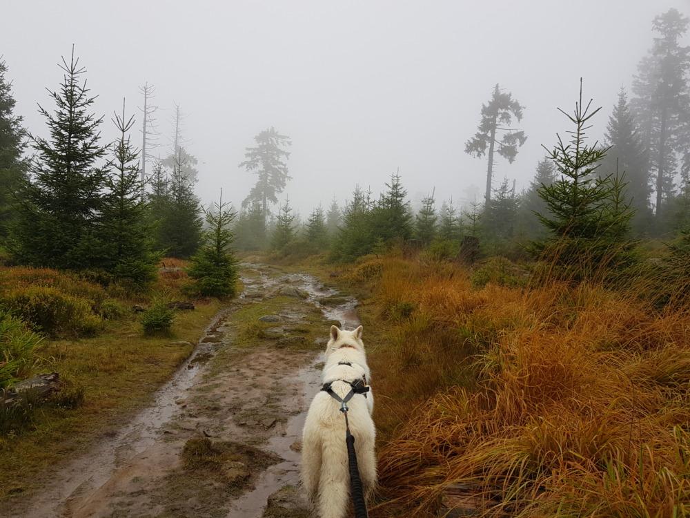Heimspiel Harz: Unser erstes Dogtrekking (HDT17, Dogtour, 35 km)