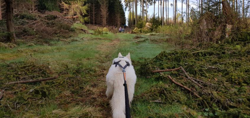 Harzquerung mit Hund – Der Weg ist das Ziel