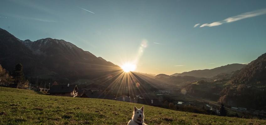 Hundeurlaub der Extraklasse in Bad Gastein