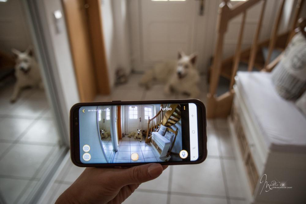Wenn du schon immer mal wissen wolltest, was dein Hund macht, wenn er alleine zuhause ist