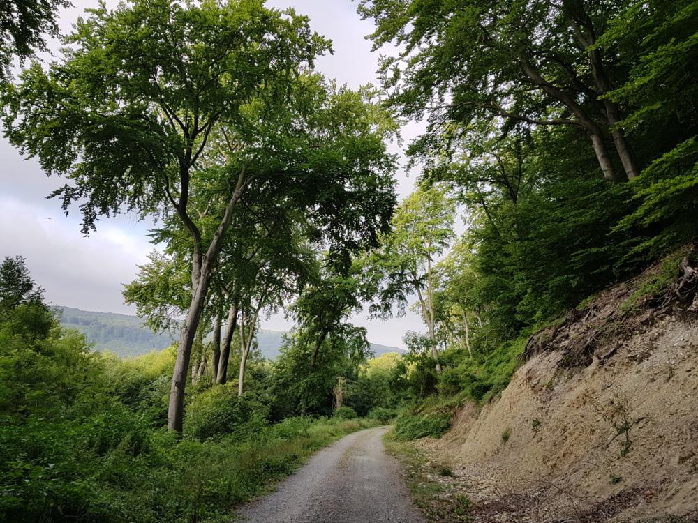 Naturpark Elm-Lappwald – das unterschätzte Wanderparadies