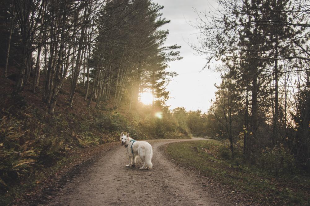 Ausflugstipp Harz: Wandern mit Hund im WeltWald Bad Grund