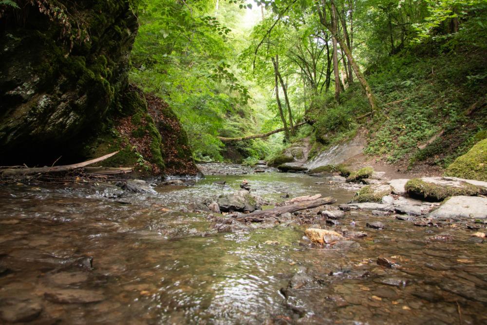 Wald, Wasser und Weitblicke: Wanderung mit Hund auf der Traumschleife Ehrbachklamm im Hunsrück
