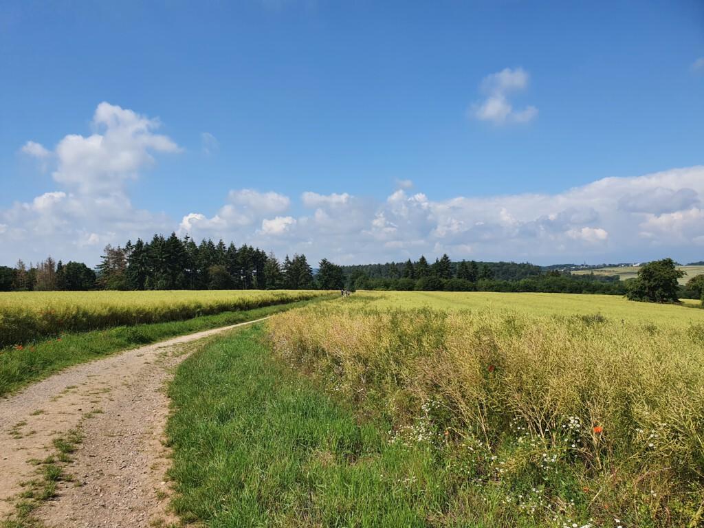 Entspanntes Wandern durchs Feld auf dem Weg zur Ehrbachklamm