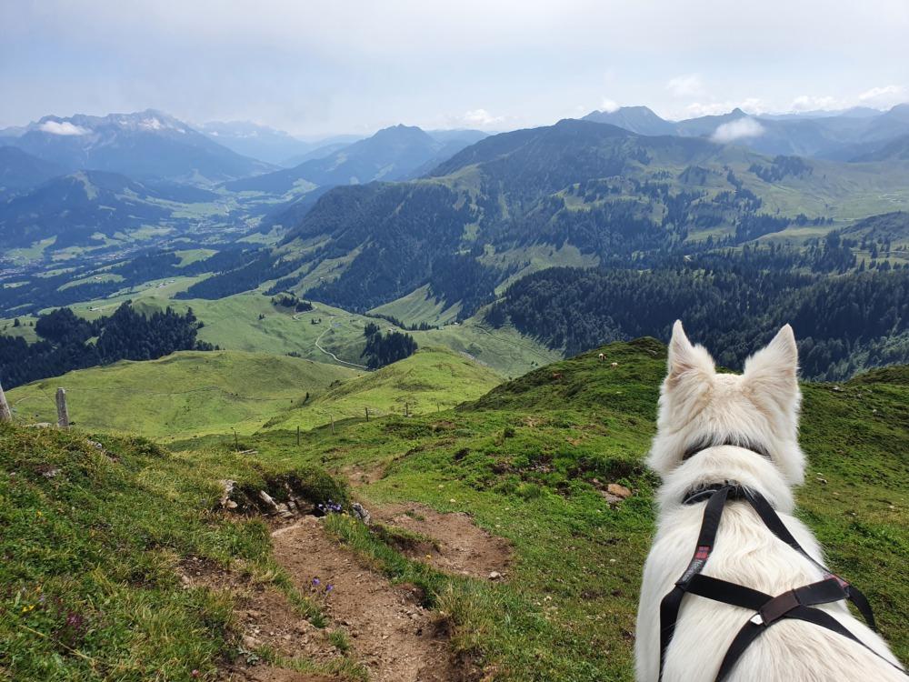 Region St. Johann in Tirol: Die schönsten Wanderungen und Ausflugsziele mit Hund