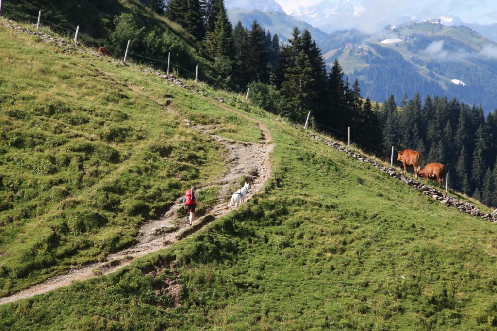 Horn-Gipfel-Höhenweg St. Johann
