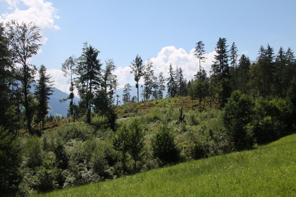 Auf der Törfchen-Runde in St. Johann in Tirol