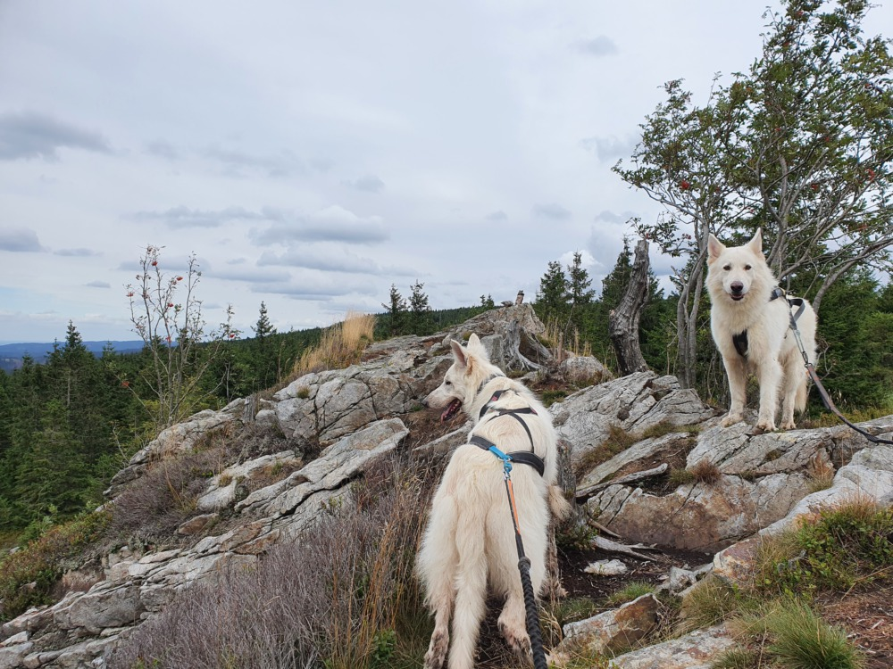 Die Hunde auf den Felsen der Hanskühnenburg