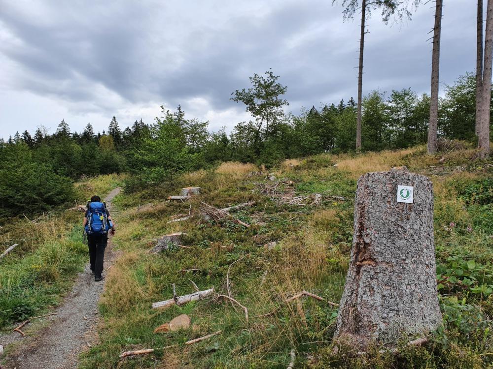 Auf dem Harzer-Hexen-Stieg - wandern auf schmalen Wegen