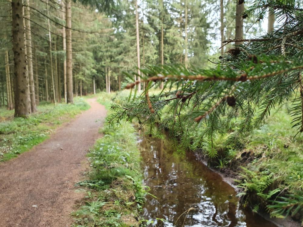 Wandern am Dammgraben im Harz direkt am Wasser