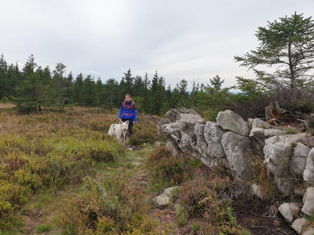 Wanderin mit Hund zwischen Heidelbeersträuchern und Felsen