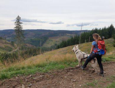 Dogtrekking im Harz – Weitwandern mit Hund