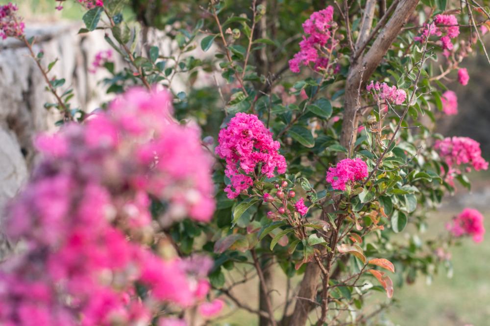 Blumen im Vipava Tal