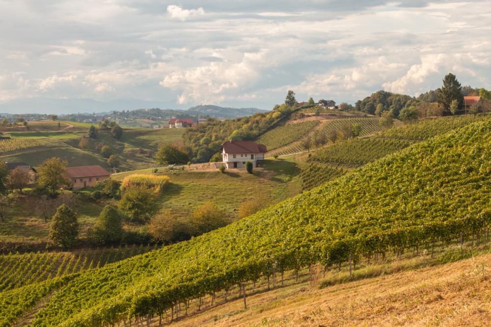 Pesnica bei Maribor in Slowenien