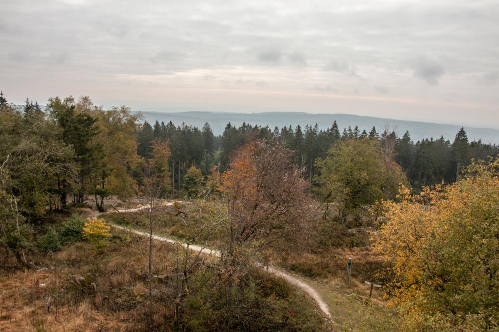 Traumschleife Gipfelrauschen am Erbeskopf im Hunsrück