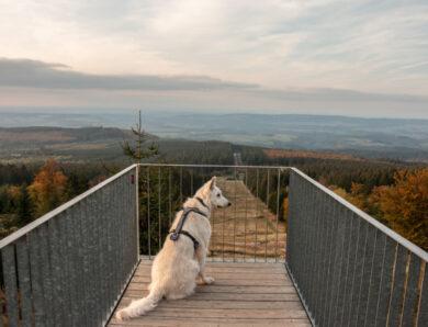 Dein perfekter Hundeurlaub in der Nationalparkregion Hunsrück-Hochwald