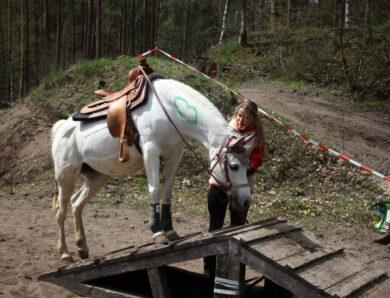 Warum Wandern mit Pferd das neue Unterwegssein ist