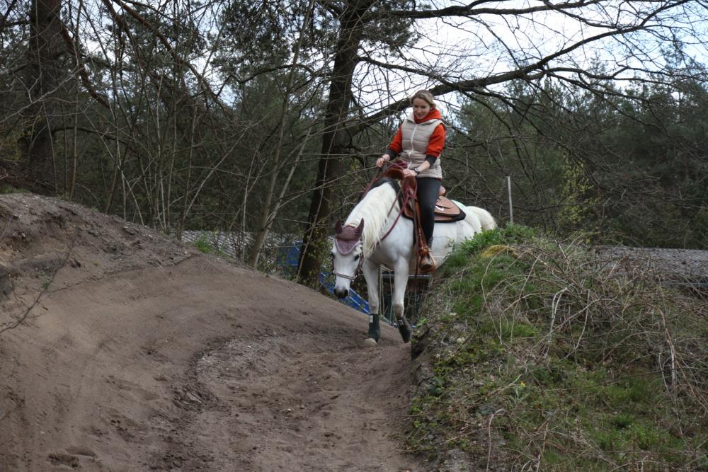 Wanderreiten und Distanzritt mit Pferd