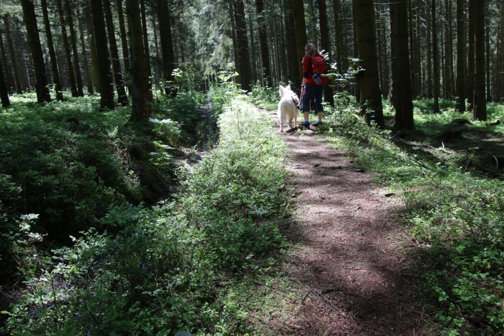 Wandern mit Hund in der Oberharzer Wasserwirtschaft