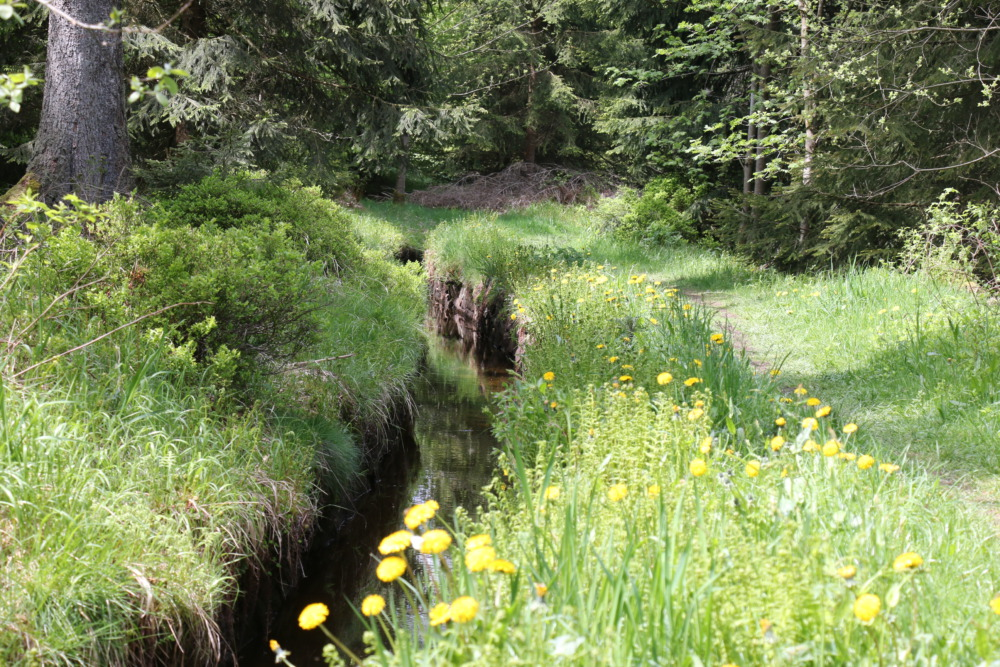 Wanderwege am Grabensystem der Oberharzer Wasserwirtschaft