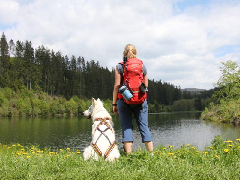 Wandern mit Hund im Oberharz: 5 Sommer-Touren
