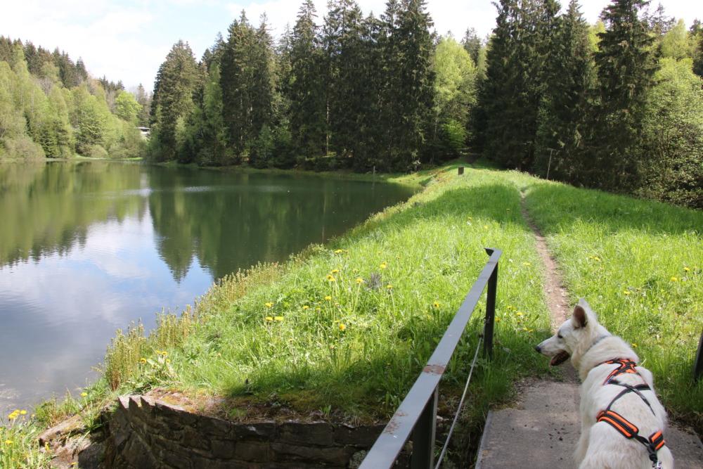 Wandern mit Hund an den Teichen der Oberharzer Wasserwirtschaft