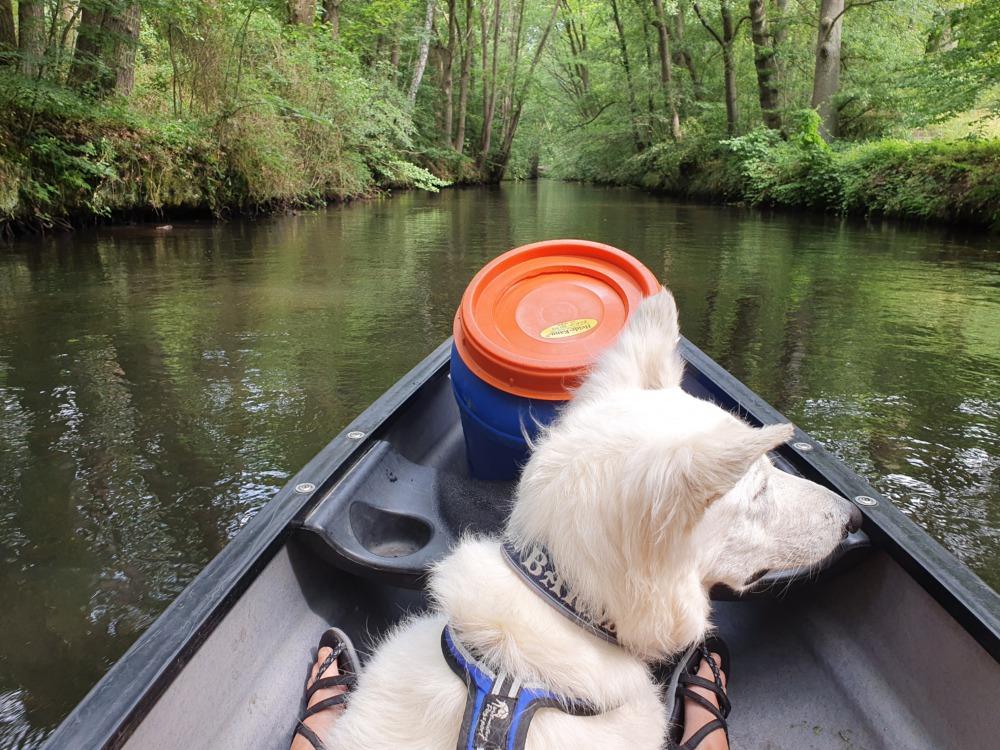 Kanu-Wandern mit Hund auf der Luhe