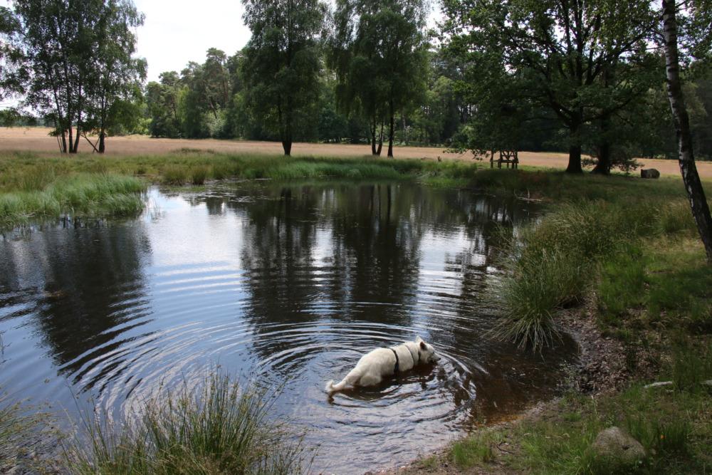 Spaziergang um den Tütsberg in der Lüneburger Heide