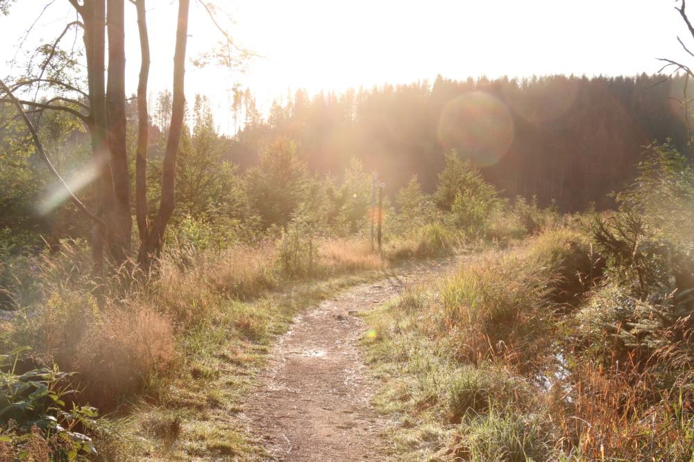 Wanderung rund um Altenau (Wolfswarte)