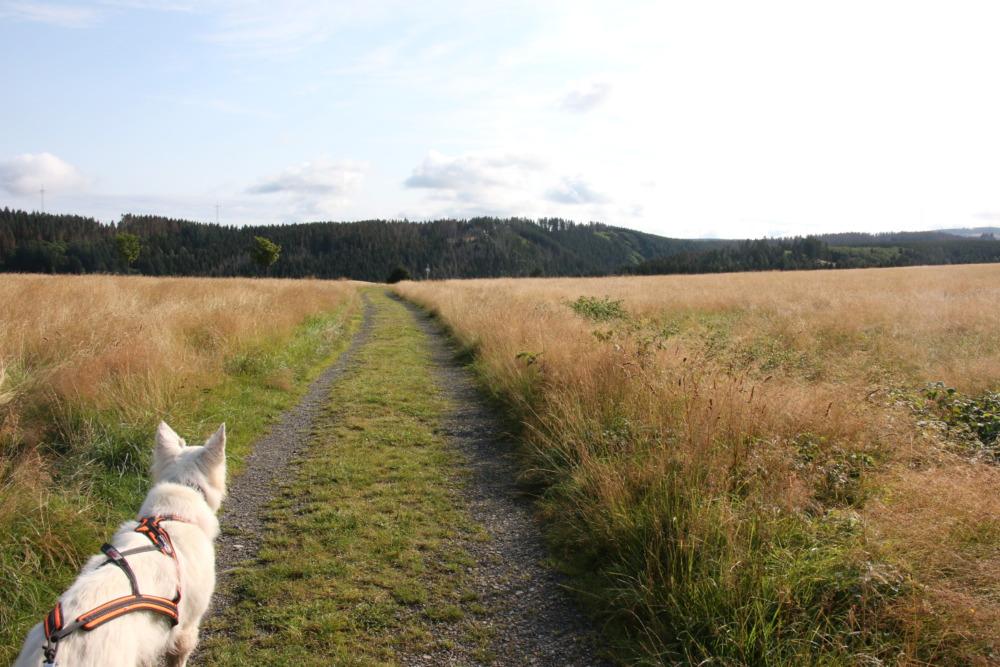 Wanderung rund um Altenau