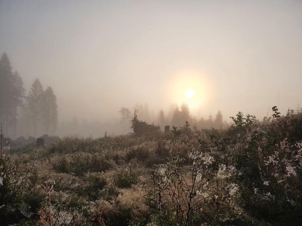 Morgenstimmung beim Harz-Dogtrekking 2021