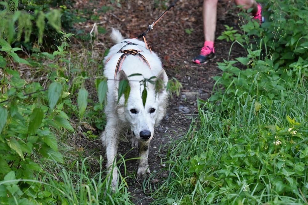 Harz-Dogtrekking 2021 (Foto: Hundestars)